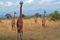 Moving to Johannesburg will give you the opportunity to explore lot's of wildlife just outside the city.